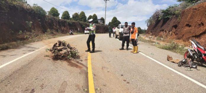 Lokasi kejadian kecelakaan di Jalan Trans-Sulawesi. Foto: Istimewa.