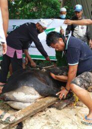 Dompet Dhuafa Sultra Kurban Ratusan Sapi di 8 Daerah, Kendari Dapat Jatah 99 Ekor