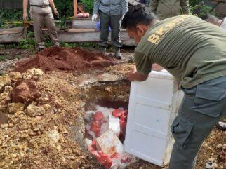Petugas Karantina Gagalkan Penyelundupan 100 Kg Daging Rusa Ilegal di Baubau